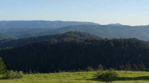 (4K) Aerial Moutain Pine Forest 1 Effect