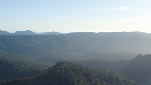 (4K) Aerial Moutain Pine Forest 2 Effect