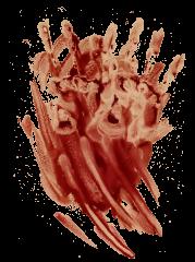 Blood Smear HD 6K