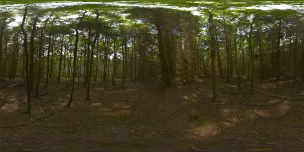 Environment Forest Hdr HD