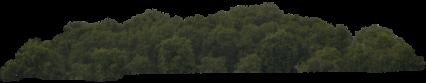 Tree Wall HD 5K
