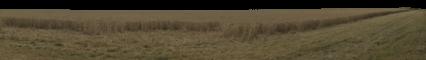 Crop Field HD 18K