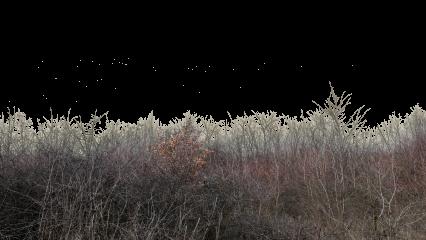 Landscape Dead Bushes HD 7K