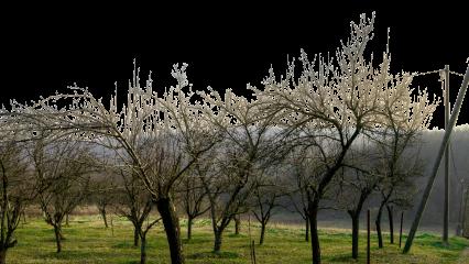 Landscape Dead Orchard HD 7K