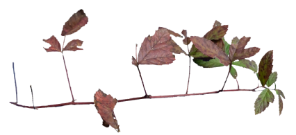 Plant Branch Texture HD 6K