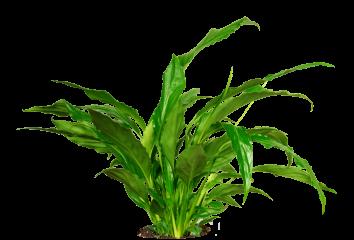 Plant Tropical HD 8K