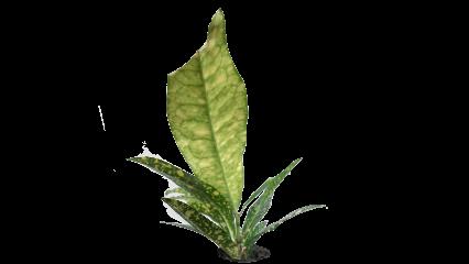 Plant Tropical HD 7K