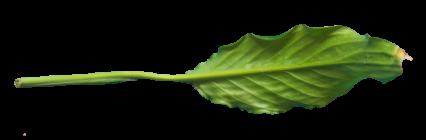 Plant Leaf Texture HD 8K