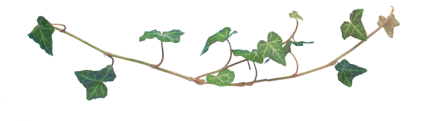 Plant Vines Texture HD 13K