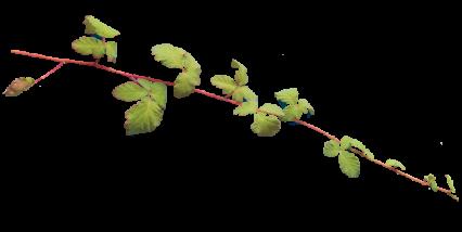 Plant Vines Texture HD 14K