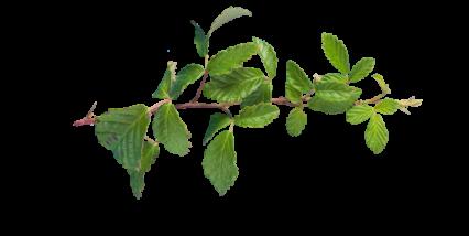 Plant Vines Texture HD 7K