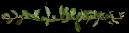 Plant Vines Texture HD 16K
