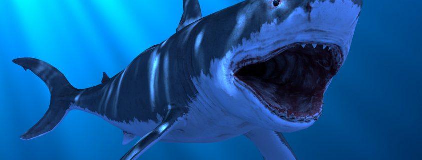 Great White Shark VFX